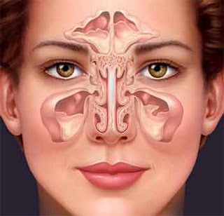 5 Causes of Sinus Infections and Sinus Problems Sinuses524