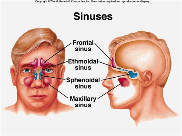 Tips for Your very own Home Remedies for Sinus Infection Sinuses721