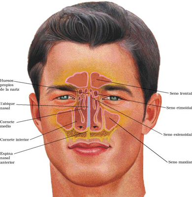 Sinus Surgery and Anesthesia in Sinus Surgery and  Sinusitis312