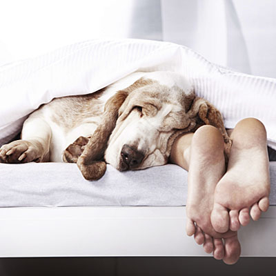 Chronic Sinusitis, Sinusitis: a Nosey Problem Sleep-with-dog-x