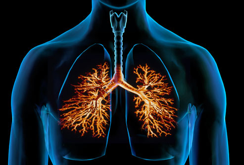 [Image: webmd-composite-image-of-bronchitis83.jpeg]