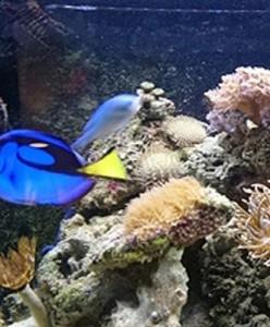 Baixar Tudo o que você precisa saber sobre aquários pdf, epub, eBook