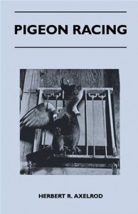 Baixar Pigeon racing pdf, epub, ebook