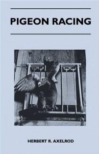 Baixar Pigeon racing pdf, epub, eBook