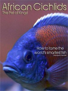 Baixar African cichlids the pet of kings!: how to tame pdf, epub, ebook