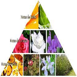 Baixar Torne-se profissional em perfumaria e familias olfativas pdf, epub, eBook