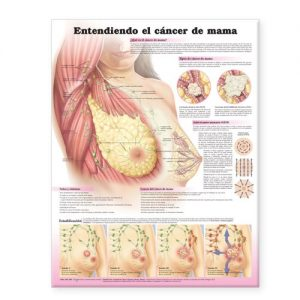 Baixar Understanding breast cancer anatomical chart in sp pdf, epub, ebook