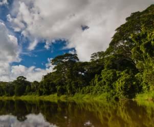 Amazonas_Miniatura.jpg