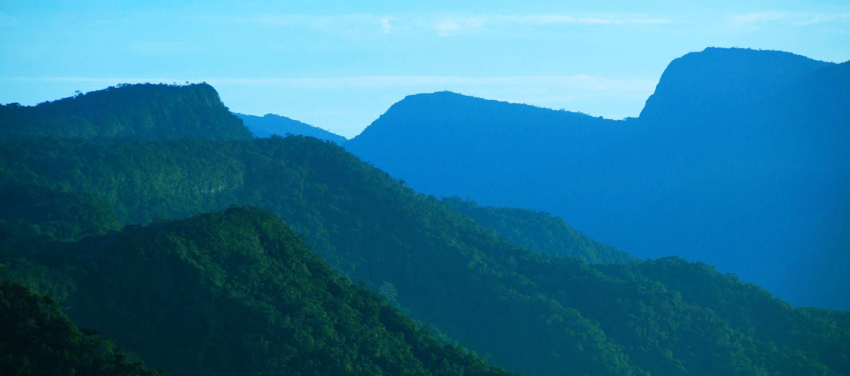 Cordillera Azul Del Campo