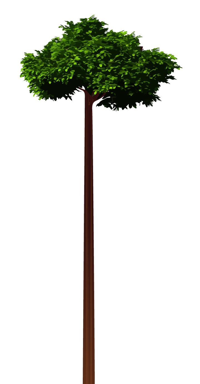 Tree-Graphic-V02