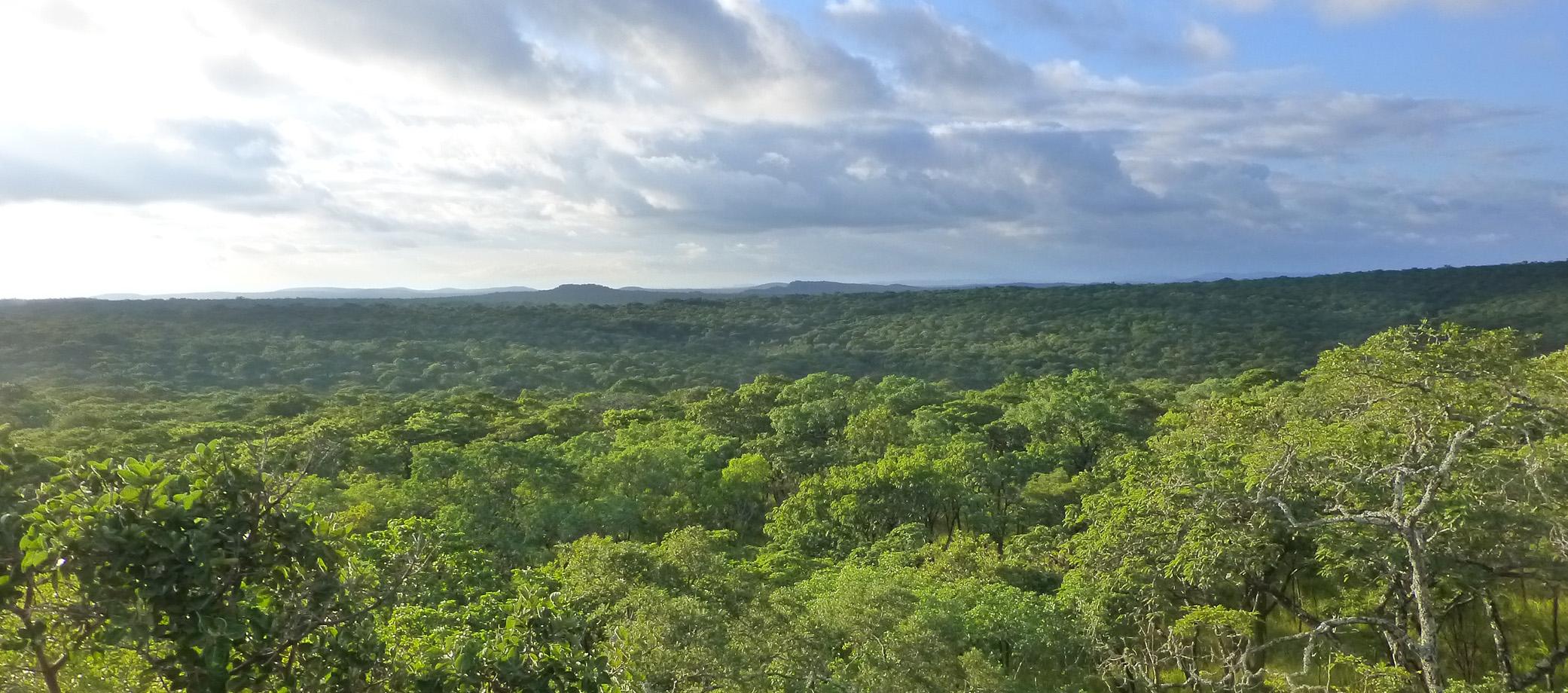 Zambia 2082x920 1