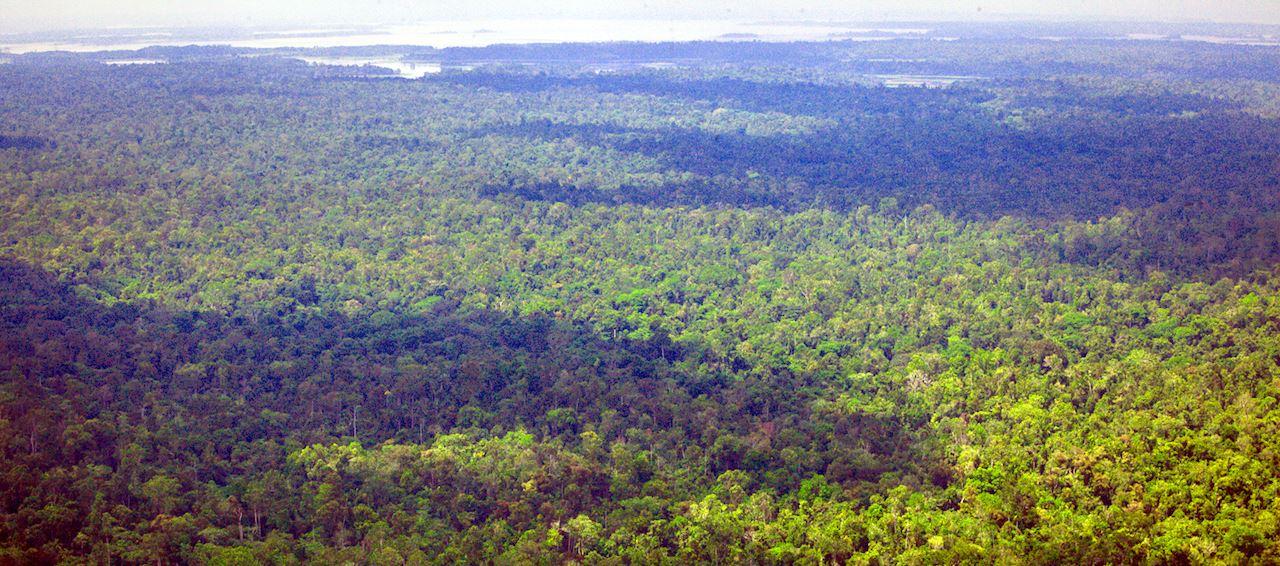 salumei-forest