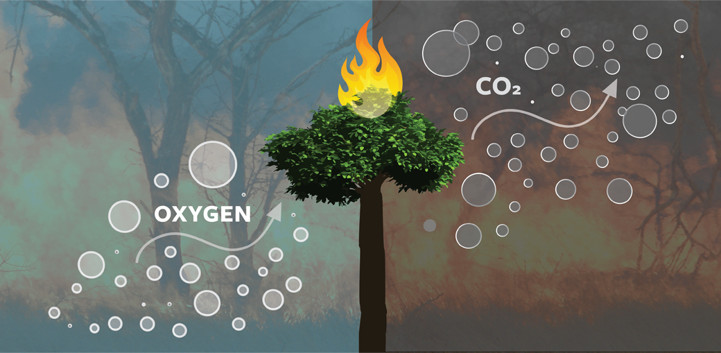 standfortrees-how-it-works-slide-co2-oxygen-2