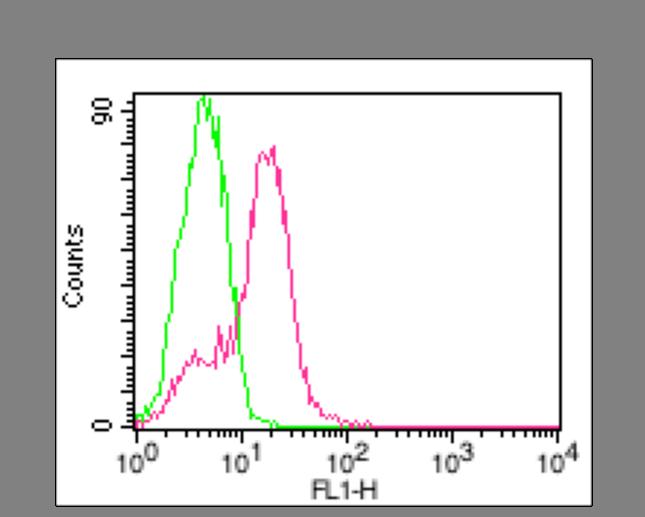 anti-ACE2, mAb (Clone: AC18F) (ATTO 488)