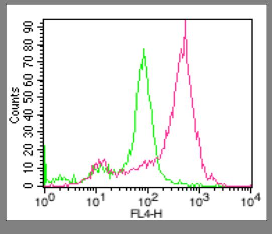 anti-ACE2, mAb (Clone: AC18F) (ATTO 647N)