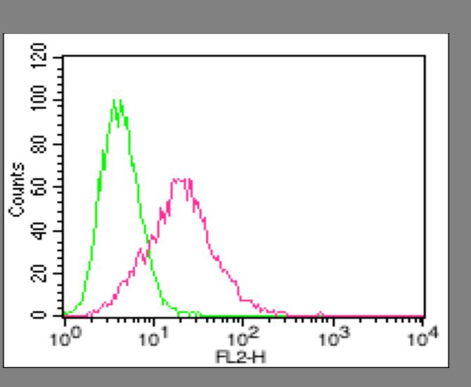 anti-ACE2, mAb (Clone: AC18F) (Biotin)