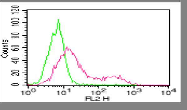 anti-ACE2, mAb (Clone: AC18F)