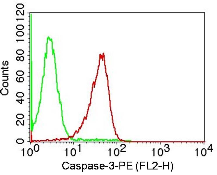 Monoclonal Antibody to Caspase-3 (Clone: ABM11D3)