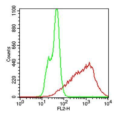 Fig-2: Cell surface flow analysis of  Rabbit recombinant h PD-1 antibody in CHO-PD1 transfected cell line  using  0.2 µg/10^6  cells of Rabbit recombinant hPD-1 antibody (Clone: ABMRR01). Green represent CHO/K1 cells  and red represent  Rabbit recombinant hPD-1 antibody. Goat anti rabbit PE  conjugate was used as secondary antibody.