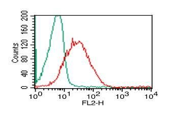 Monoclonal Antibody to HMGB1 (Clone: ABM24C2)