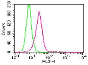 Monoclonal Antibody to Human IL-1beta (Clone: ABM26G5)