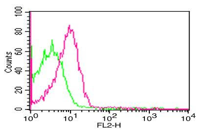 Monoclonal Antibody to FOXP3 (Clone: 3G3 )