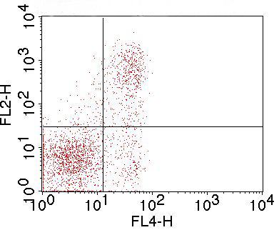 Monoclonal Antibody to mFolate Receptor 4 (Clone: TH6)