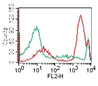 Monoclonal Antibody to CD3 (Clone: OKT3)
