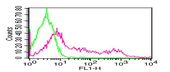 Monoclonal Antibody to  Human CD8 (Clone: RPAT8) FITC conjugated