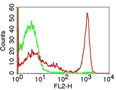Monoclonal antibody to mCD4 (Clone: GK1.5 )