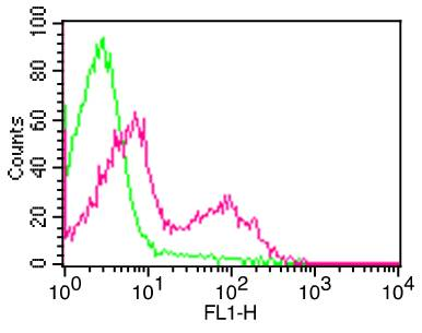 Monoclonal Antibody to mCD3 (Clone:  145-2C11)  FITC conjugated