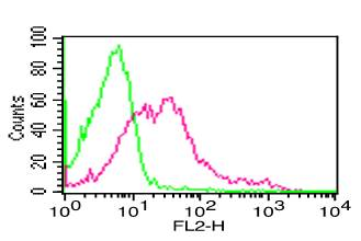 Monoclonal Antibody to hCD13 (Clone: BF10)