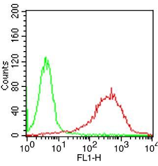 Monoclonal Antibody to hCD6  (Clone:  SPV14)