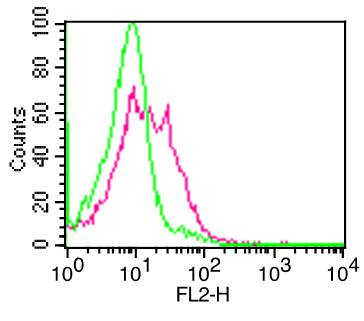 Monoclonal Antibody to CD10  (Clone:  CB-CALLA)