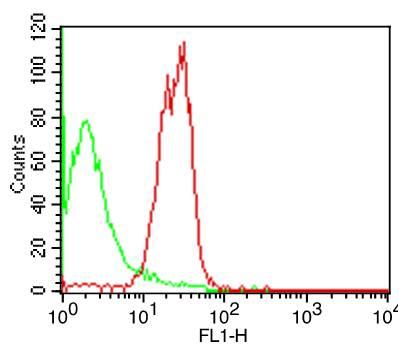 Monoclonal Antibody to hCD98 (Clone: LN-1)