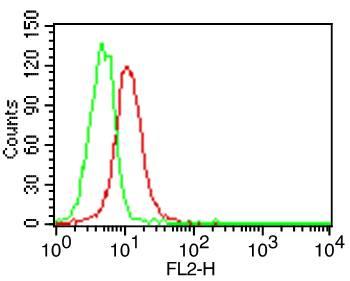 Monoclonal Antibody to Human CD70 (Clone: BU69)