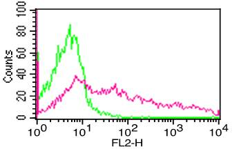 Monoclonal Antibody to hCD195 (Clone: 12D1)