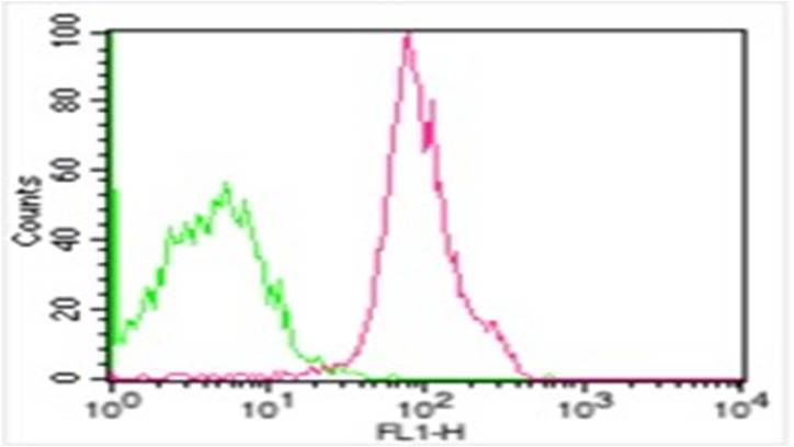 Monoclonal Antibody to hCD47 (Clone: B6H12) FITC conjugated