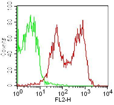 Monoclonal Antibody to CD69 (Clone: FN61 )