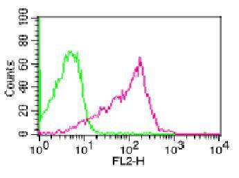 Monoclonal Antibody to p65 (Clone: ABM1A16)