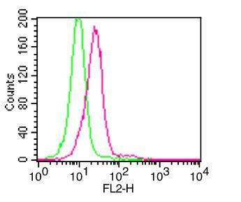 Monoclonal Antibody to IkB alpha (Clone: ABM11B7)