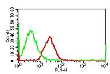 Monoclonal Antibody to CD56-FITC conjugated  (Clone: 123C3)