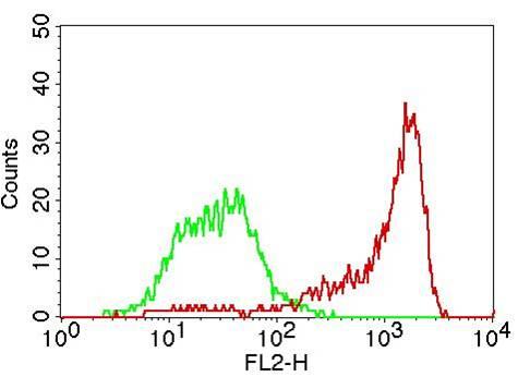 Monoclonal Antibody to CD31 (Clone: PECAM-1)