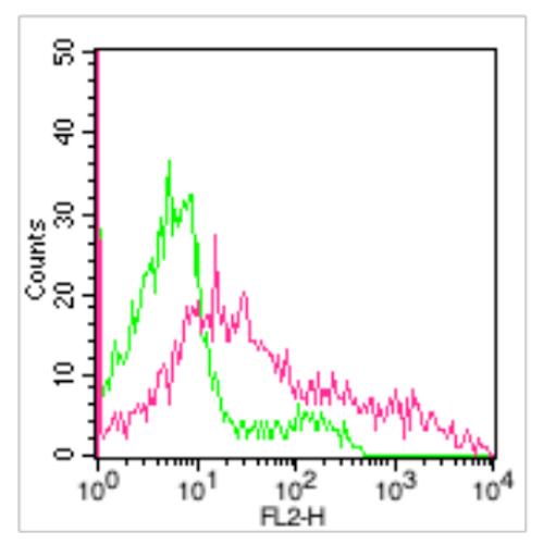 Mouse Anti-Human CD36 (Clone : 185-1G2)
