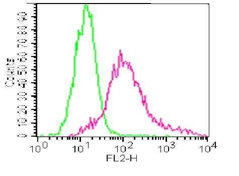 Monoclonal Antibody to Myogenin (Clone: ABM30A5)