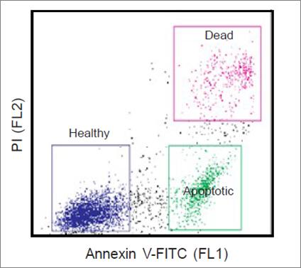 Annexin V-FITC Apoptosis Detection Kit