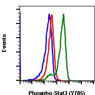 Phospho-Stat3 (Tyr705) (Clone: B12) rabbit mAb PE conjugate
