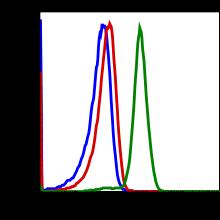 Phospho-Stat6 (Tyr641) (Clone: G12) rabbit mAb