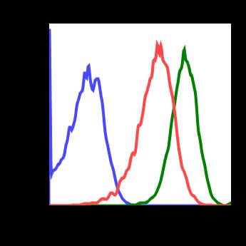 Phospho-p38 MAPK (Thr180/Tyr182) (Clone: E3) rabbit mAb
