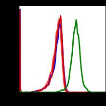 Phospho-Zap70 (Tyr493)/Syk (Tyr526) (Clone: H11) rabbit mAb FITC conjugate